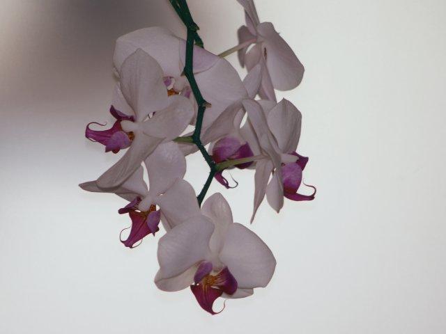 orchideen_040.jpg